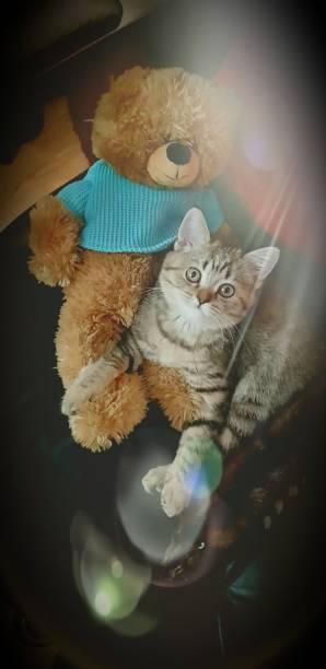 Cтоковое фото Beautiful kitten