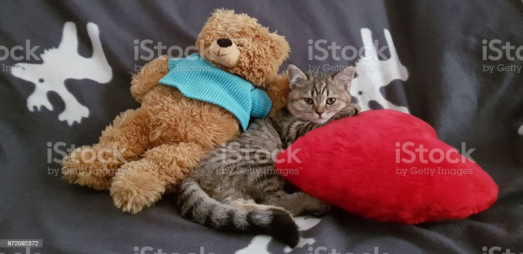 Beautiful kitten with toys стоковое фото