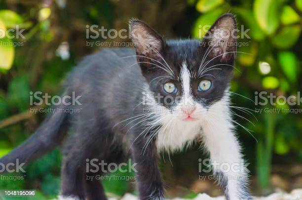Beautiful kittens playing together and each with himself picture id1048195096?b=1&k=6&m=1048195096&s=612x612&h= rojk2s1pr3qeab1kkx6q1gd9iqdiiywpp5fkgsvyne=