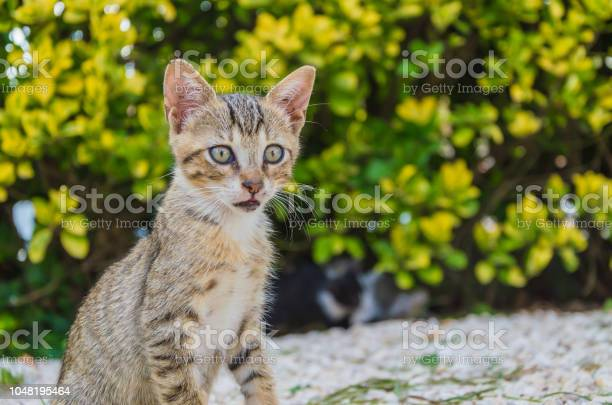 Beautiful kittens playing together and each with himself picture id1048195464?b=1&k=6&m=1048195464&s=612x612&h=adbo14 gxcihgmdormj5tqaslwffgul54ski7jncy2q=