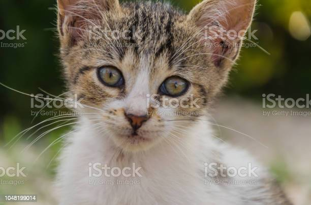 Beautiful kittens playing together and each with himself picture id1048199014?b=1&k=6&m=1048199014&s=612x612&h=gnvpuqqzbjhd dlc8gjc36naippjqu1rbgaba6yecl8=