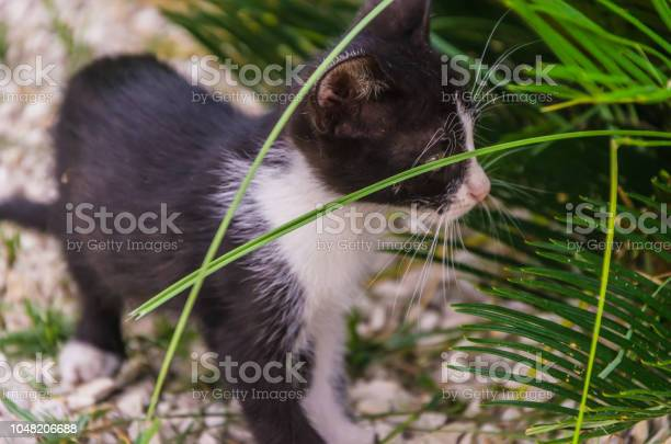 Beautiful kittens playing together and each with himself picture id1048206688?b=1&k=6&m=1048206688&s=612x612&h=re8yht5gmezjl5ppkxvvqdvlrt5jbmk0ruqkisupnry=