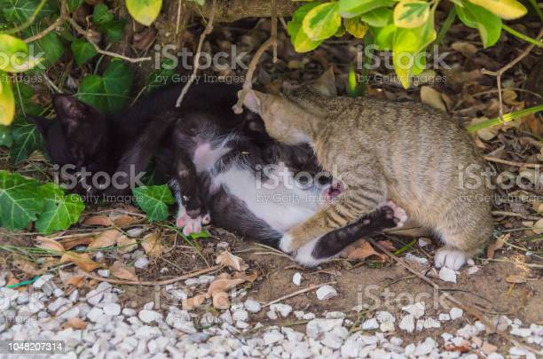 Beautiful kittens playing together and each with himself picture id1048207314?b=1&k=6&m=1048207314&s=612x612&h=yerlqt57s pzqpoaj8egkuvba1n3muqky8rlh63ljfc=