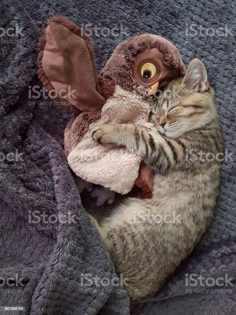 Beautiful kitty stock photo