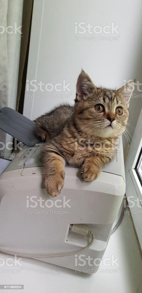 Beautiful kitty стоковое фото
