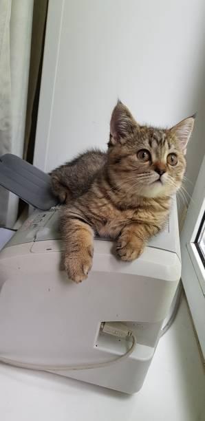 Cтоковое фото Beautiful kitty
