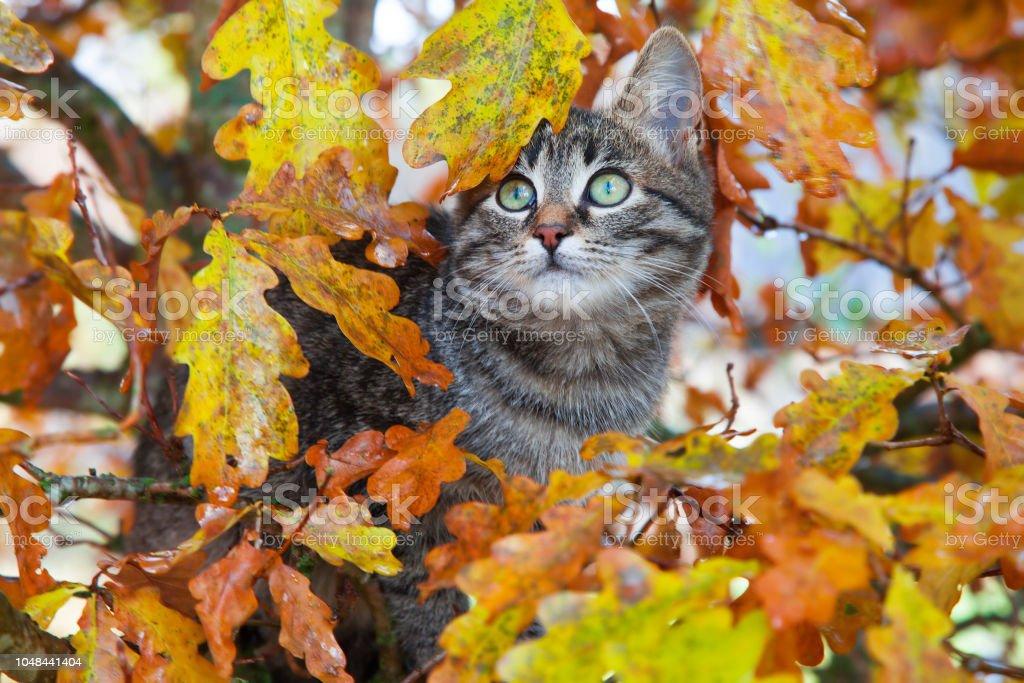 Schöne Kätzchen sitzt auf der Herbst Baum – Foto