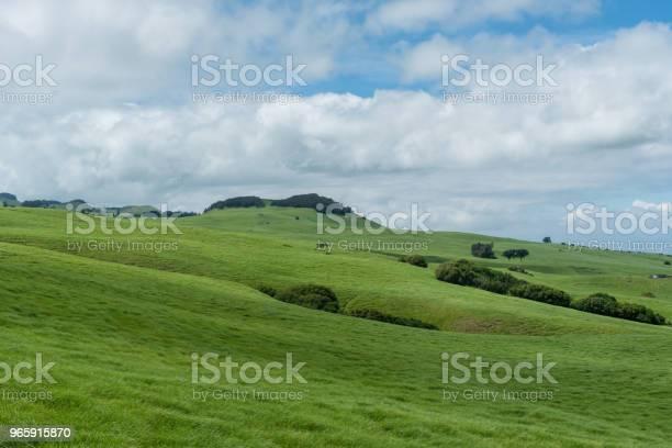 Beautiful Kohala Meadow Vista On The Big Island Of Hawaii - Fotografias de stock e mais imagens de Agricultura