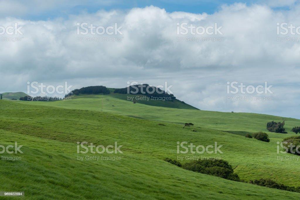 Beautiful Kohala meadow vista on the Big Island of Hawaii - Royalty-free Agricultural Field Stock Photo