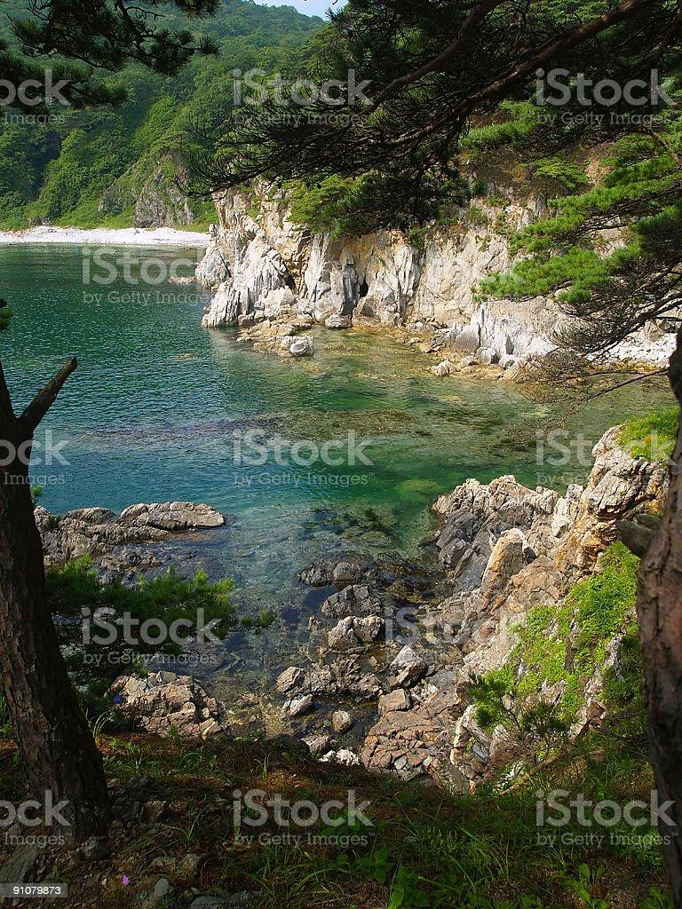 beautiful korean pine seaside island royalty-free stock photo