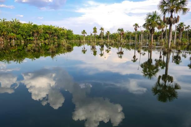 Schöne Lagoa das Araras bei Sonnenuntergang mit Spiegelreflexen, Bom Jardim, Amazonien, Brasilien – Foto