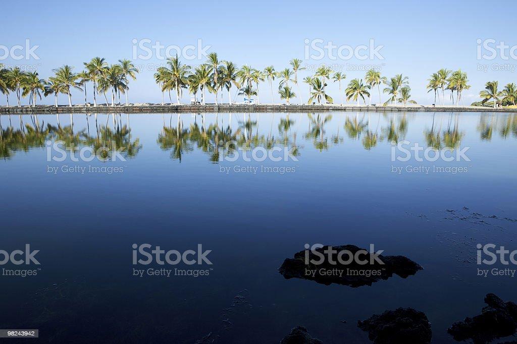 아름다운 라그나, 야자수 나무, 푸른 하늘 royalty-free 스톡 사진