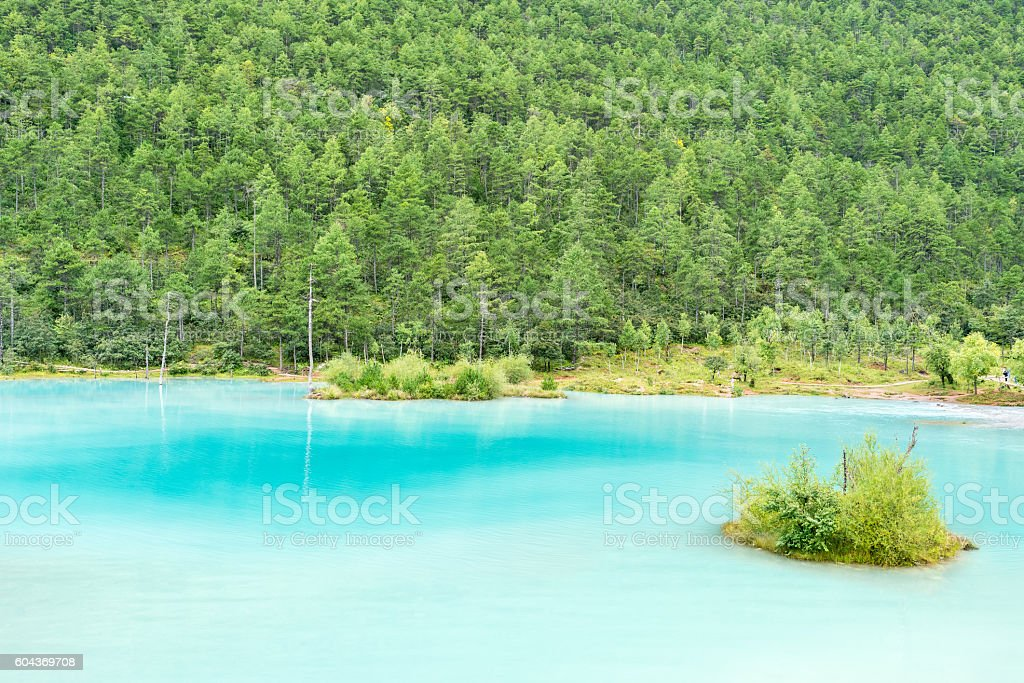 beautiful lake and forest stock photo