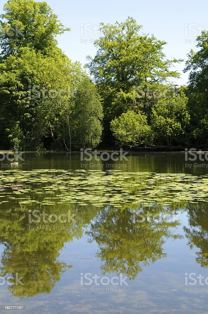 Beautiful Lake Reflection stock photo