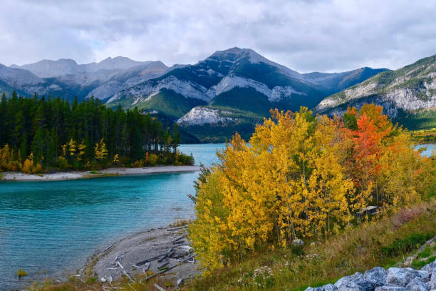 Beautiful lake surrounded by mountains and colorful yellow aspen trees in Canadian Rockies. stock photo
