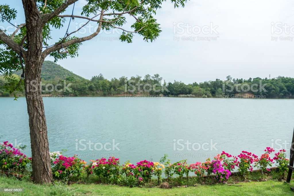 Beautiful lake view with colorful flower in garden royalty-free stock photo