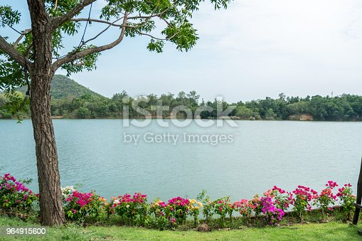 Beautiful Lake View With Colorful Flower In Garden Stock Photo & More Pictures of Beauty