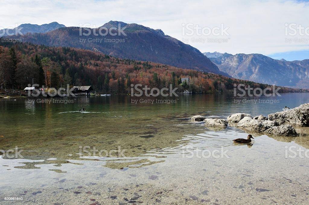 Beautiful Lakes of Slovenia - Bohinj stock photo