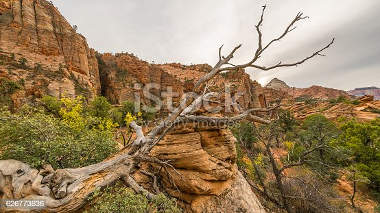 Scenic view of the canyon. Zion National Park, Utah, USA