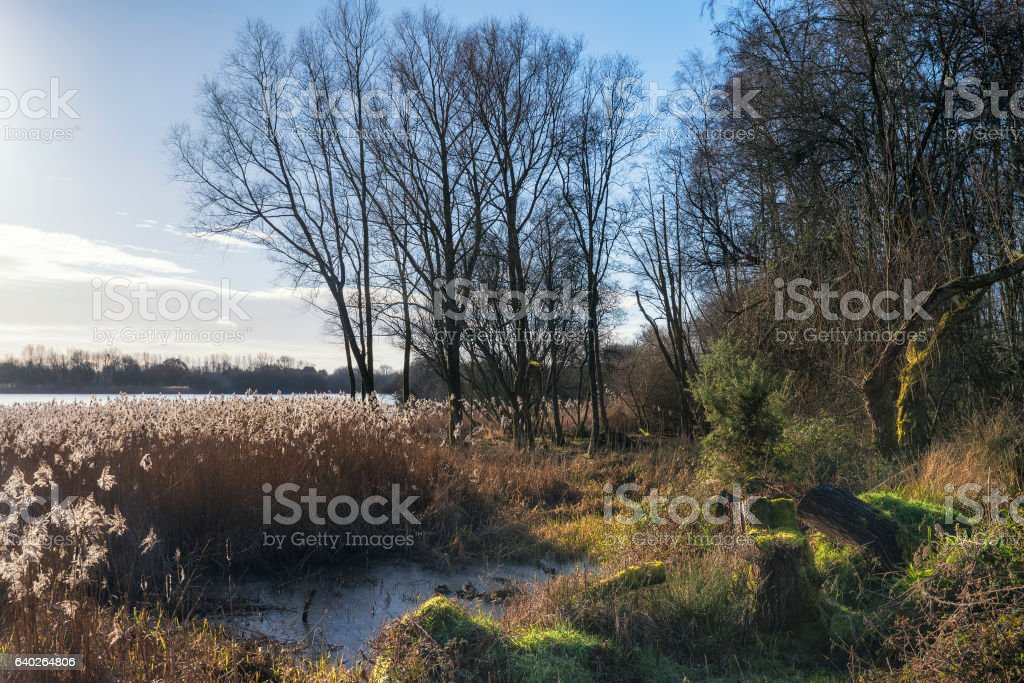 Beautiful landscape image of Winter reeds in golden early morning stock photo