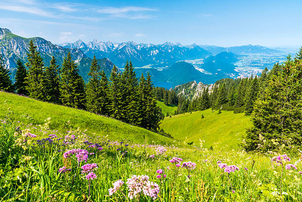 schöne landschaft in der racecourse-alpen, tegelberg - allgäu stock-fotos und bilder
