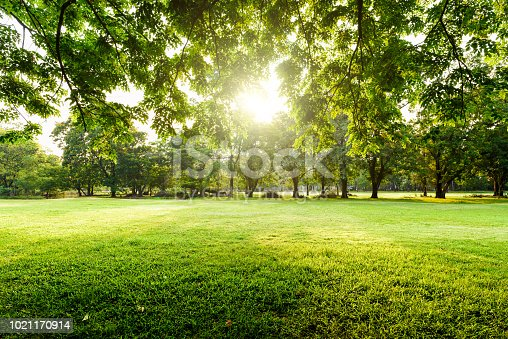 istock Beautiful landscape in park with tree and green grass field at morning. 1021170914