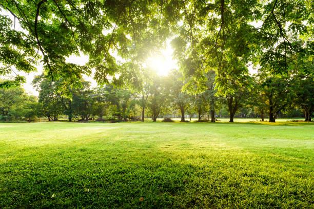 bela paisagem no parque com árvores e grama verde campo na manhã. - gramado terra cultivada - fotografias e filmes do acervo