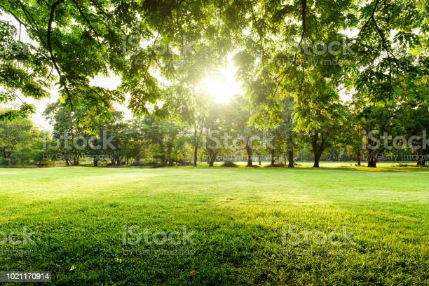 Photo of Beautiful landscape in park with tree and green grass field at morning.