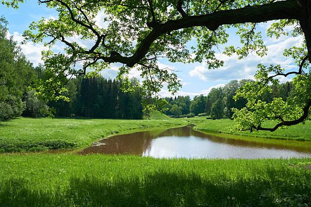 Magnifique paysage à Pavlovsk parc. Saint-Pétersbourg - Photo