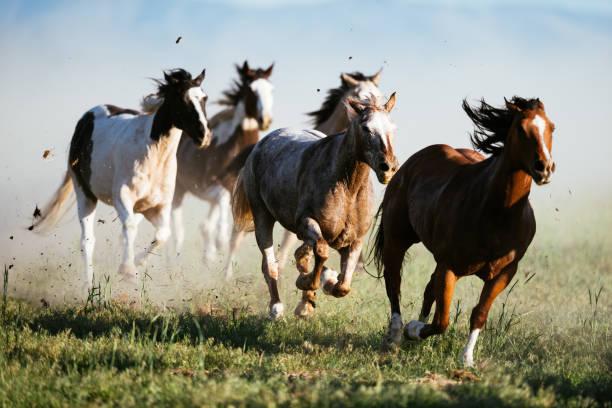 Beautiful landscape in wild west in usa wild horses galloping picture id1134191309?b=1&k=6&m=1134191309&s=612x612&w=0&h=fjl5biwzxmu3nq6z19otw1qelljx7kl zwbjeku29pi=