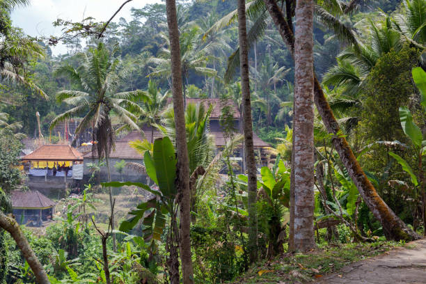 Beautiful landscape of a tropical Indonesian rainforest. Palm trees and a village near Beautiful landscape of a tropical Indonesian rainforest. Palm trees and a village near nature sulawesi stock pictures, royalty-free photos & images