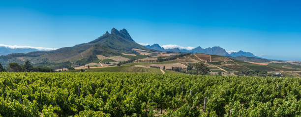 Beautiful landscape of Cape Winelands, wine growing region in South Africa Beautiful landscape of Cape Winelands, wine growing region in South Africa western cape province stock pictures, royalty-free photos & images