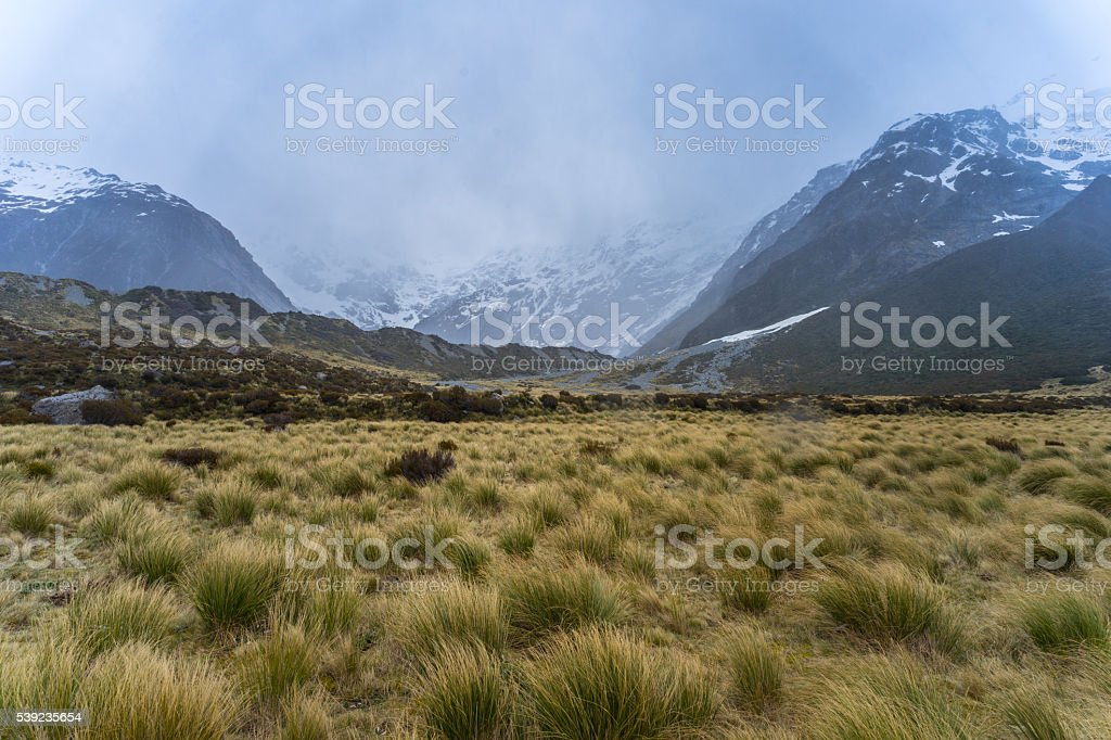 Beautiful landscape of golden meadows from Hooker Valley trail royalty-free stock photo