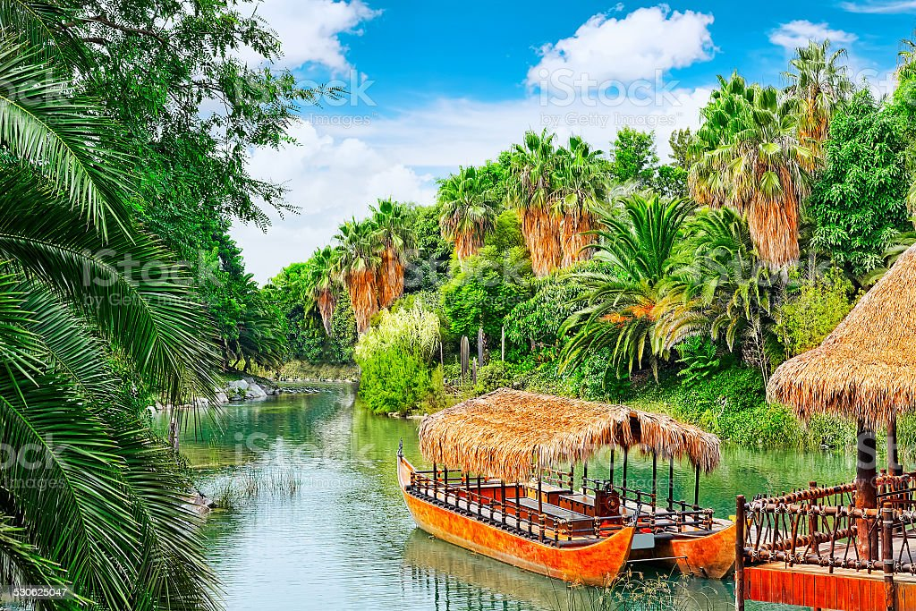 Beautiful landscape of humid tropical jungle. stock photo