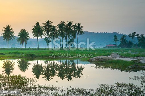 Beautiful landscape of row of coconut trees and reflection on lake. Countryside in Malaysia.