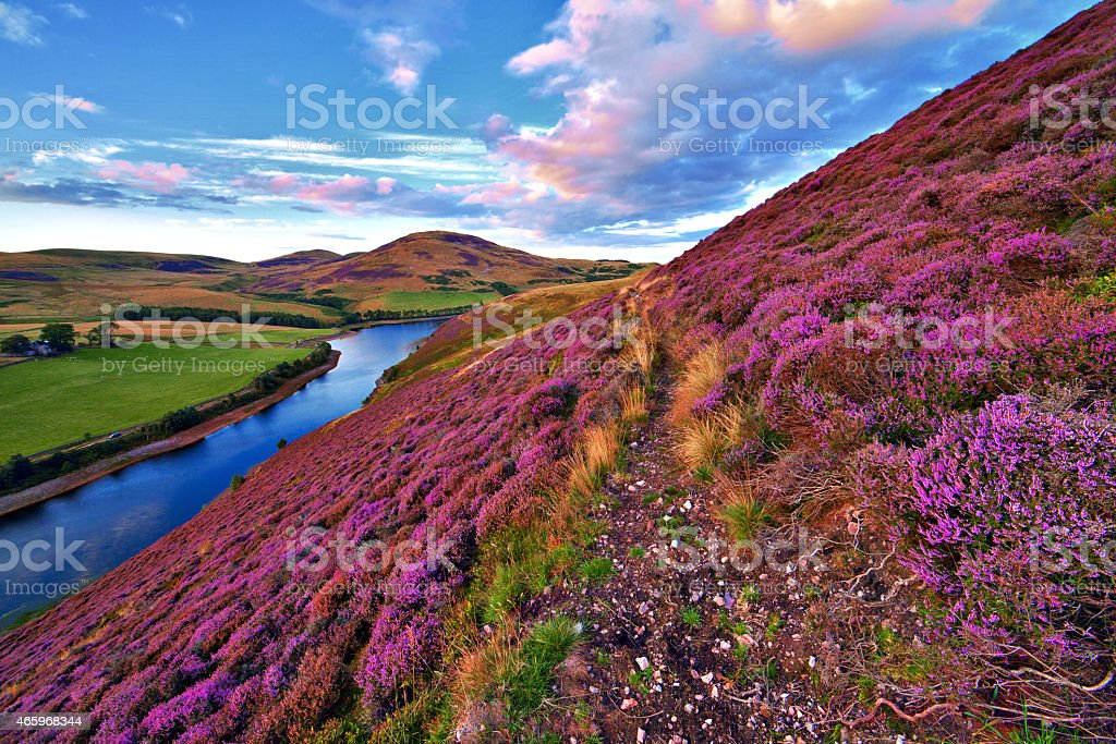 Beautiful landscape of scottish nature Vivid colorful landscape scenery with a footpath through the hill slope covered by violet heather flowers and green valley, river, mountains and cloudy blue sky on background. Pentland hills, near Edinburgh, Scotland 2015 Stock Photo