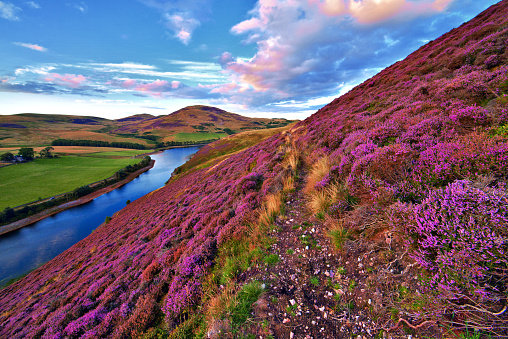 Beautiful Landscape Of Scottish Nature Stock Photo - Download Image Now