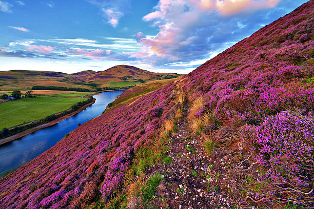Beautiful landscape of scottish nature Vivid colorful landscape scenery with a footpath through the hill slope covered by violet heather flowers and green valley, river, mountains and cloudy blue sky on background. Pentland hills, near Edinburgh, Scotland scottish highlands stock pictures, royalty-free photos & images