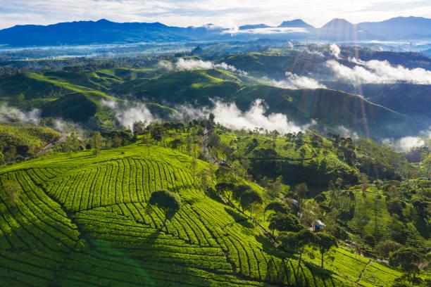 Hermoso paisaje de plantación de té por la mañana - foto de stock