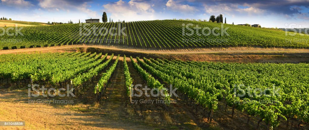 Beautiful landscape of Vineyards in Tuscany. Chianti region in summer season. Italy. stock photo
