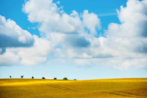 beautiful landscape - skåne bildbanksfoton och bilder