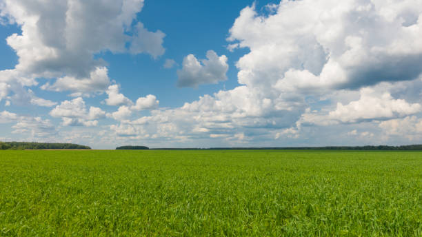 Beautiful landscape, sky and green fresh grass. Grass and sky at beautiful day. stock photo