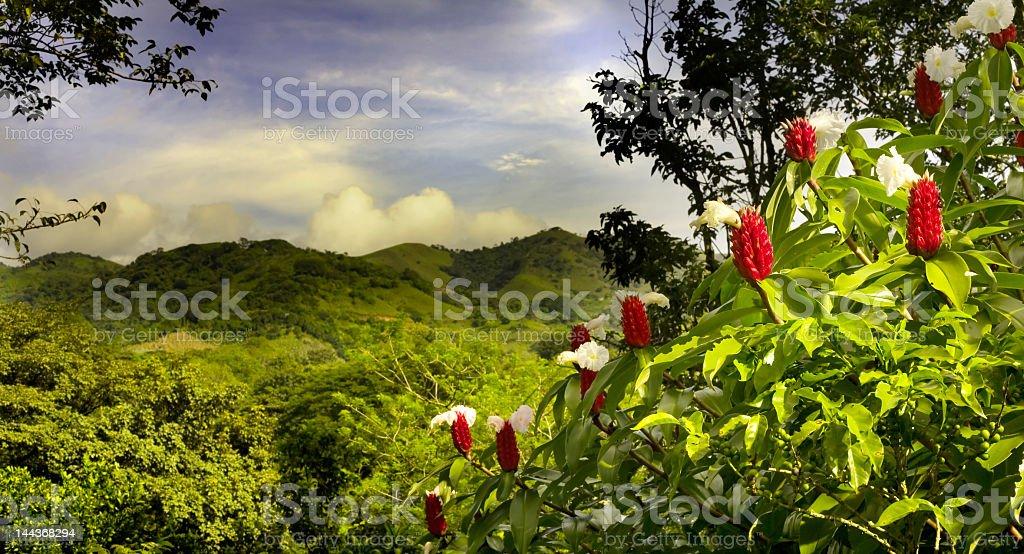 A beautiful landscape view of lush foliage in Costa Rica stock photo