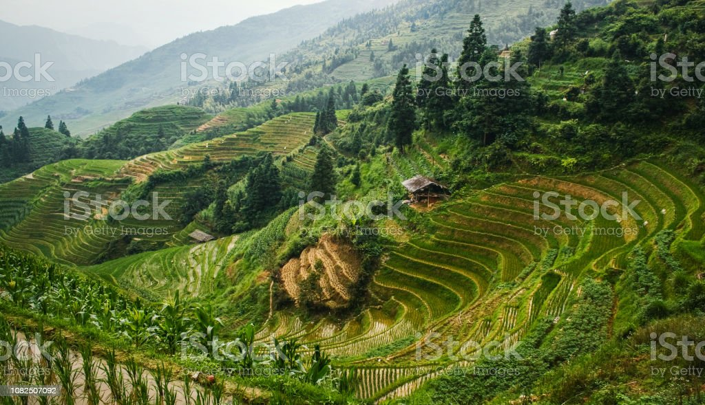 Beautiful landscape view of rice terraces and house. Longsheng Rice...