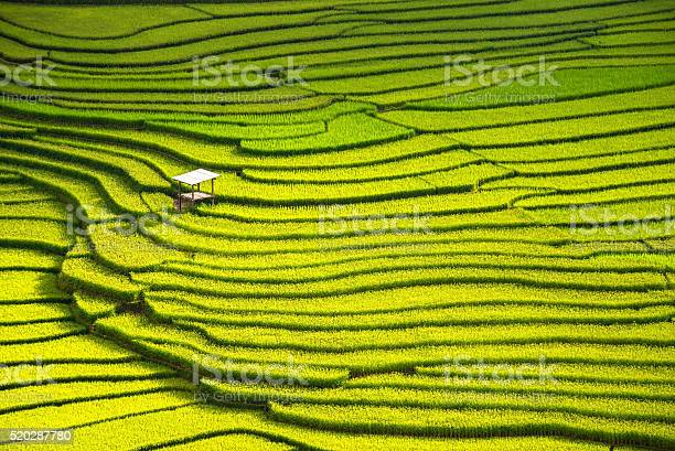 Beautiful landscape view of rice terraces and house picture id520287780?b=1&k=6&m=520287780&s=612x612&h=5f6 6w0lpgfgxokjfqklfnh2iobygayawjasoactzp8=