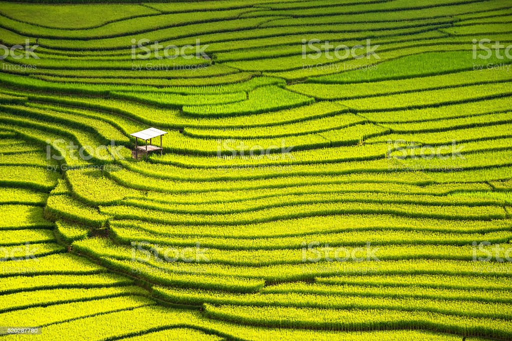 beautiful landscape view of rice terraces and house stock photo