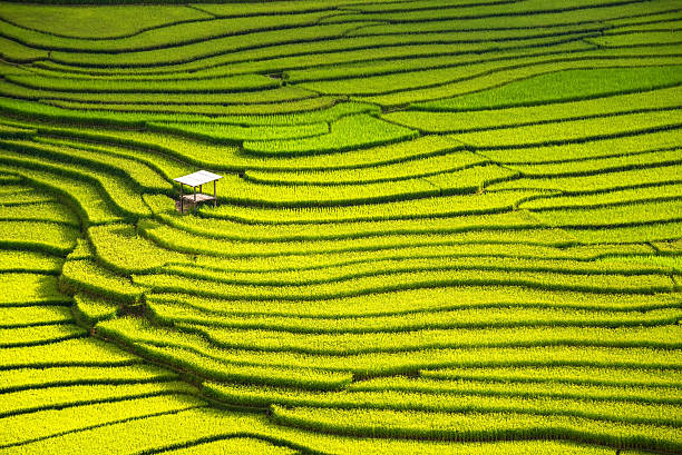 beautiful landscape view of rice terraces and house - terras veld stockfoto's en -beelden