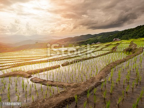 607590542istockphoto Beautiful landscape view of rice terraces and hut at chiang mai , Thailand. The village is in a valley among the rice terraces. 1153459791