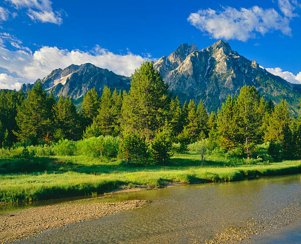 Beautiful landscape view of saw tooth range The Sawtooth Range sits in the distance in  a meadow, in the Sawtooth National Recreation Area of Stanley, Idaho.  national forest stock pictures, royalty-free photos & images