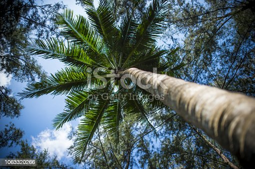istock Beautiful landscape with a pathway surrounded by green palm trees, Phuket, Thailand. 1063320266